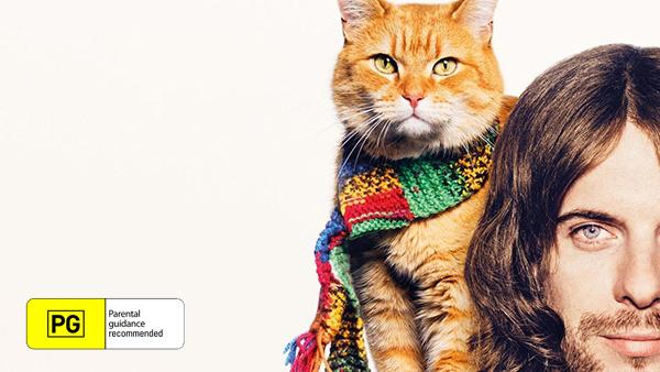 Catflix Cat Cinema - Catmosphere
